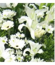 funeral flower lily